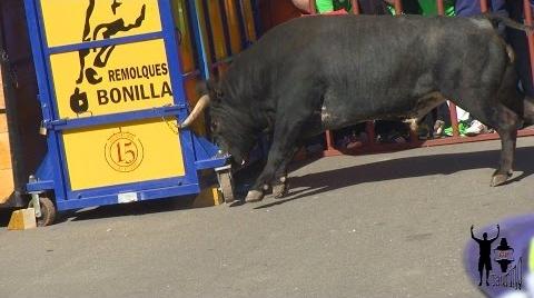 ¿Entra el toro en la casa? Toro Sarmiento 2015 La Seca